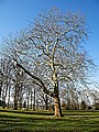 Copped Hall garden tree, Epping, Essex, England.jpg