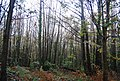 Coppiced trees, Fore Wood - geograph.org.uk - 1577165.jpg