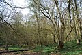 Coppicing, Green Wood - geograph.org.uk - 1252953.jpg