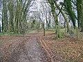 Copse near Hanging Langford - geograph.org.uk - 1059163.jpg
