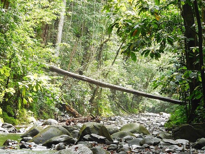Cours d'eau et Biotope (4).jpg