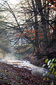 Creek at Hungry Mother State Park (4073347100) (3).jpg