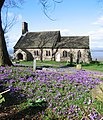 Crocuses at St. Peter's church - geograph.org.uk - 351900.jpg