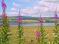 Cromarty Firth (2499055540).jpg