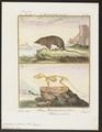 Crossopus fodiens - met skelet - 1700-1880 - Print - Iconographia Zoologica - Special Collections University of Amsterdam - UBA01 IZ20900147.tif