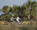 Cycling Pair By Carole Robertson.jpg