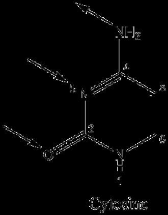Guanine - Image: Cytonum 2
