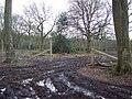 Deer fencing in Grovely Woods - geograph.org.uk - 350636.jpg