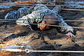 Defense.gov News Photo 110215-A-XXXXB-000 - A U.S. Army National Guardsman crawls under an obstacle during air assault school at Camp Blanding Joint Training Center Fla. on Feb. 15 2011.jpg