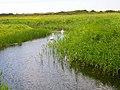 Dengemarsh Sewer - geograph.org.uk - 448997.jpg