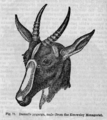 Descent of Man - Burt 1874 - Fig 71.png