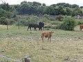 Desert des Agriates - panoramio.jpg