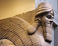 Detail of Winged Human-Headed Lion from Nimrud - Apr 2011.jpg