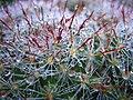 Dewy Cactus II.jpg