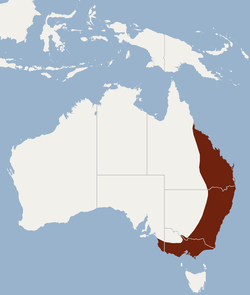 Distribution of Nyctophilus gouldi.png