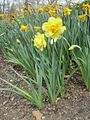 Dixon Gardens Memphis TN 2014-04-06 019.jpg