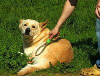 Dog Grooming Se Portland