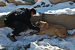 Dog handlers in Afghanistan 130104-A-RT803-089.jpg