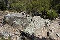 Dolmen des collets de Cotlliure06.jpg