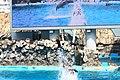 Dolphin show - Nagoya Aquarium - Japan (15863331632).jpg