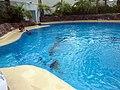 Dolphins (7980922459).jpg