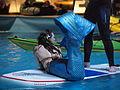 DoubleBubble Mermaids at Helsinki International Boat Show 2016 31.jpg