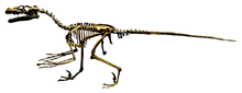 Dromaeosaurus reconstruction Royal Tyrrell 2 (white background).png