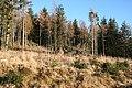 Dunbennan Forest - geograph.org.uk - 688194.jpg