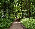 Durch den Wald - panoramio.jpg