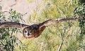 Eagle Owl (3309468026).jpg