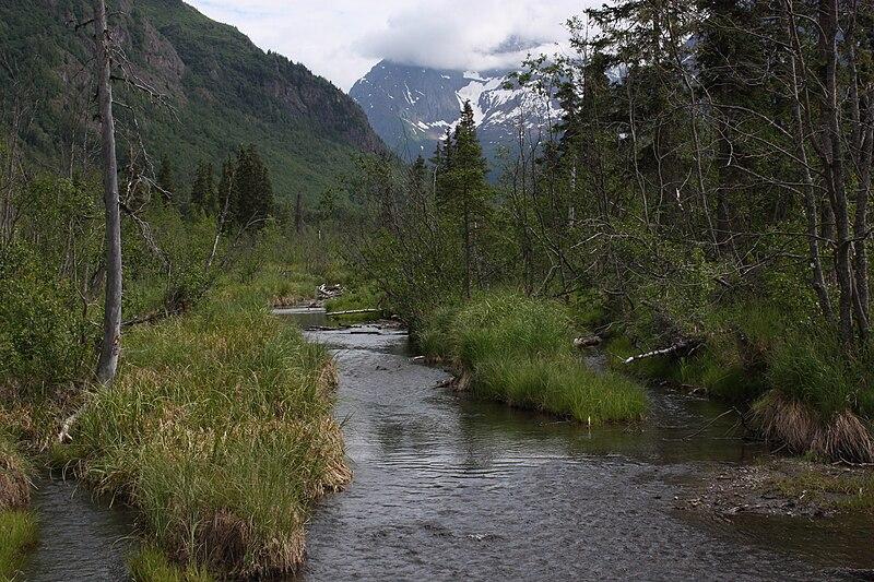 Eagle River Nature Center Bear