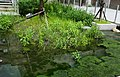 Eco pond at marine museum 海科館生熊池 - panoramio.jpg