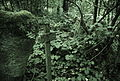 Eisenzeitliche Grabhügelgruppe Bärhau, Unterlunkhofen, Grabhügel Nr 63, auf Kuppe.jpg