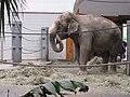 Elefantenhaus Tierpark Hellabrunn3.jpg
