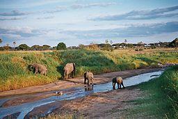 Elefanter i Tarangirefloden
