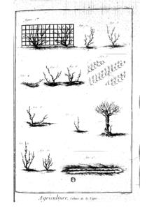 Photographie montrant une planche illustrée de divers modes de taille de la vigne: gobelet, échalas sur arbres, palissage sur treillis, marcottage. Les dessins en noir sur fond blanc sont réalisés sans décor pour être clairement utilisés.