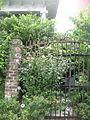 Esplanade Ave FQ Sept O9 Flowered Gate.JPG