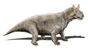 Dinocephalia - Estemmenosuchus, an estemmenosuchid