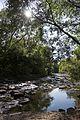 Etobicoke Creek.jpg