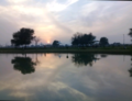 Evening view sun set.png
