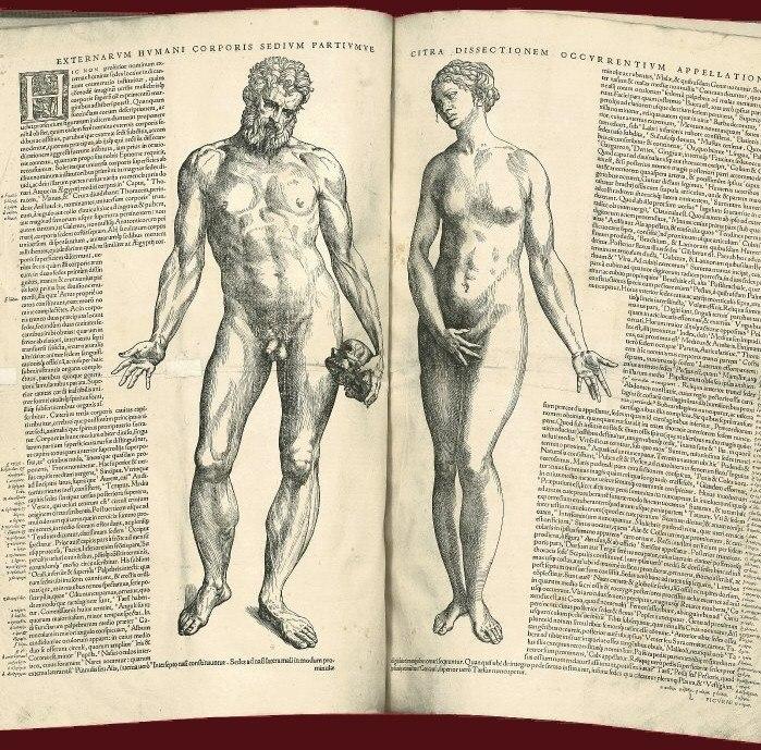 Externarvm hvmani corporis sedivm partivmve, 1543.