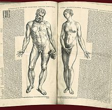 anatomy nude female developement