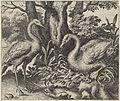 Fabel van de zwaan en de ooievaar.jpeg