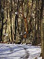 Farby zimy - panoramio.jpg
