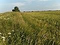 Farmland, Middleton - geograph.org.uk - 205940.jpg