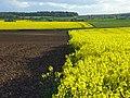 Farmland, Woodcote - geograph.org.uk - 790090.jpg