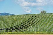 Feldkirchen Briefelsdorf 55 Weingut Weingut Trippel 20042016 3073.jpg