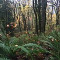 Ferns and trees at Evans Creek Preserve.jpg