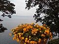 Fiori lago bracciano (14898407535).jpg