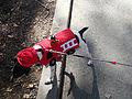 Fire truck dog (1700250807).jpg